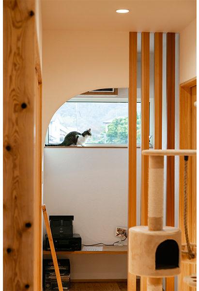 猫と暮らす家