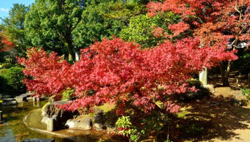 炭鉱王の庭園紅葉