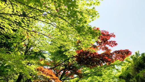 古賀市でマイホーム(建売・不動産)の購入、注文住宅をご検討の方へ